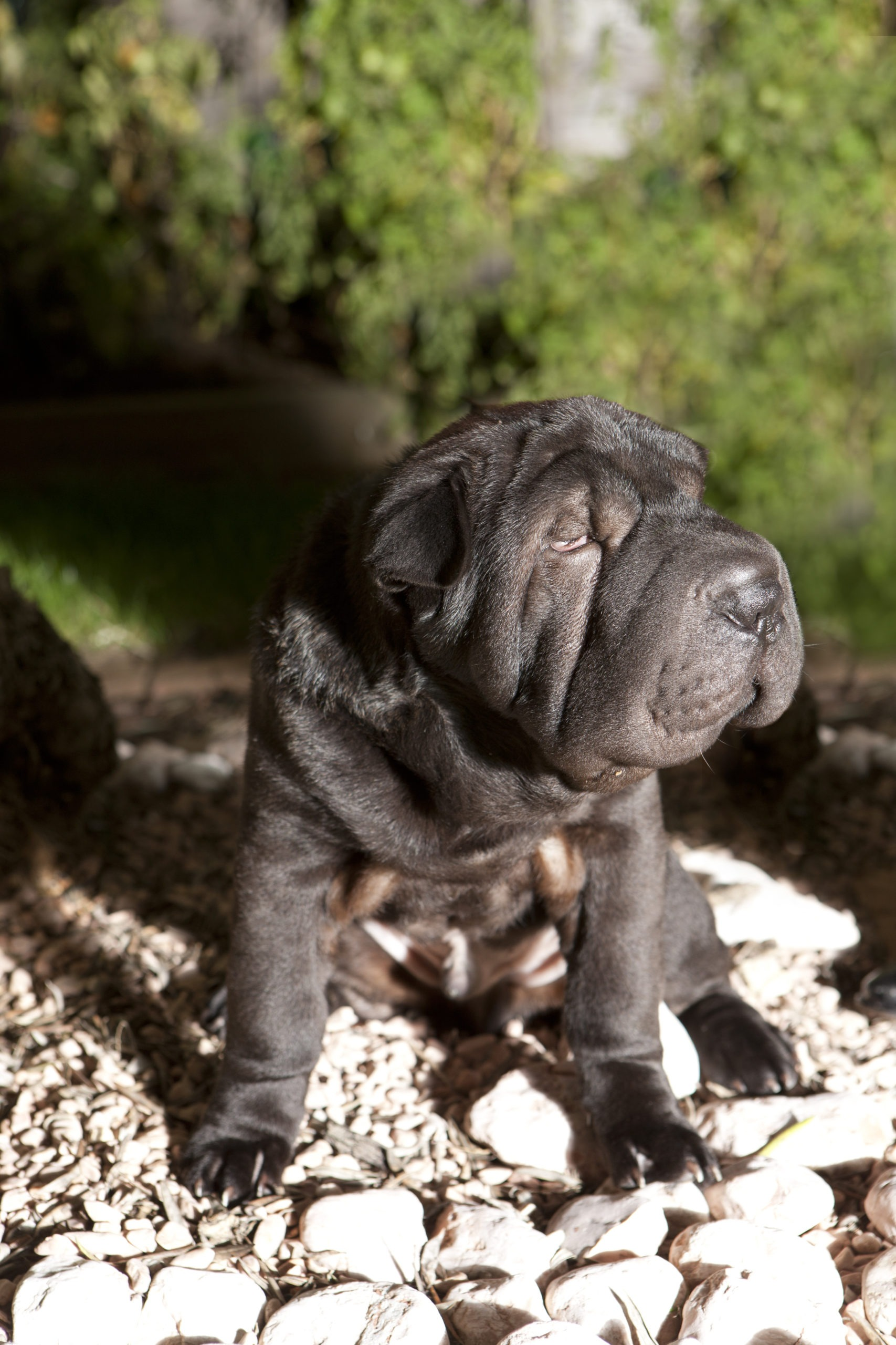 Funky, le chien dans le jardin de sa maison Berthelot Constructions à Saint-Sébastien-sur-Loire